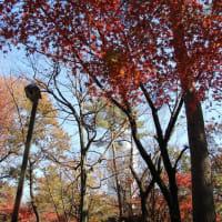 紅葉の穴場