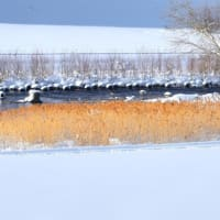 とある日、冬の豊平川