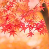 たのしい万葉集 黄葉を詠んだ歌(松の葉に月はゆつりぬ・・・)