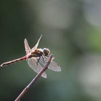 蟋蟀在戸(キリギリスとにあり)