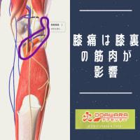 膝痛は膝裏の筋肉が影響している