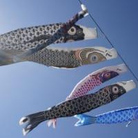 木城町椎木の鯉のぼり