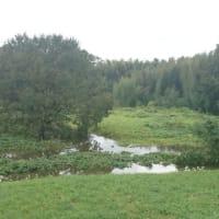 福田の森の、様子を見に行きました