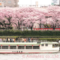 2020年東京のお花見屋形船(その2:平年の開花時期)