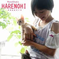 7/26 子猫撮影♫ 札幌写真館フォトスタジオハレノヒ