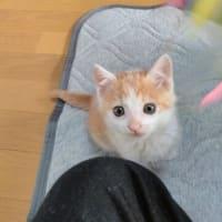 ネコがきた…その後