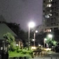 雷は凄いけど、お散歩(〃ノωノ)