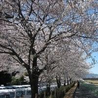 桜をテーマにしたギター曲 作りました