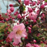 久しぶりの実家の春