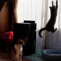 日溜りの猫
