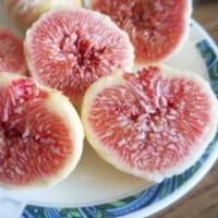 蓬莱柿(ほうらいし)・日本いちぢく