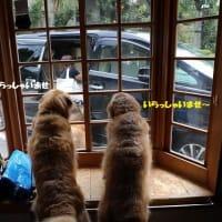 台風去って伊豆高原へ(その4)
