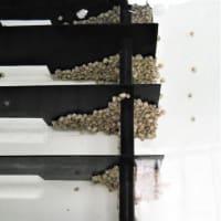 貝類の生産状況