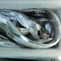『テンヤタチウオ釣り』@東京湾口