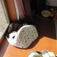 小布施のフルーツサンド 黒猫