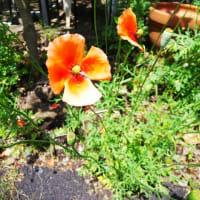 お題  綺麗な花