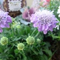 11/20 新しい寄植え鉢-L 作成