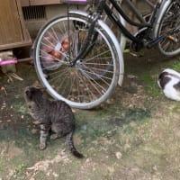妻の実家の猫達
