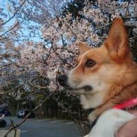 箱根の開花情報!