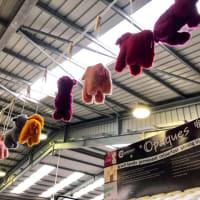 ヒツジにさわって匂いが嗅げる!動物好きの夢の実現!いえ、編み物愛好家の極楽浄土、歴史ある羊毛生産の中心地ヨークシャーでの編み物フェア