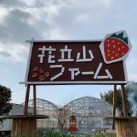朝倉でイチゴ狩り「4種類食べ比べできる花立山ファーム」