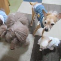 20/03/21 犬の幼稚園BuddyDog