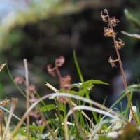 💖ハルトラノオ・ヨゴレネコメなど 小さい花色々💖