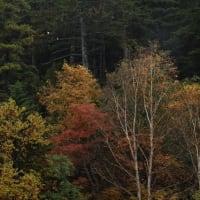 濁河の紅葉