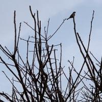 スズメ見なくはないね?64 we have seen some sparrows