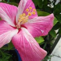 沖縄の歴史 ~ 6月23日は沖繩「慰霊の日」 ~ 牛島司令官自刃の日