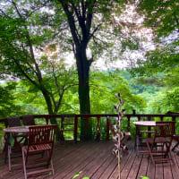 風が涼しいウッドデッキの森で明日のコーヒー講座を考える。
