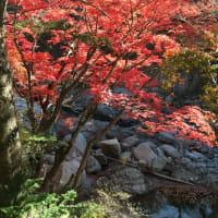 やっぱり秋は紅葉がいい