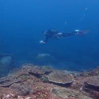 9月15日(水)なんと!太陽がのぞく鵜来島に!見たかったウミガメにも会えて、最高の1日を楽しみました!