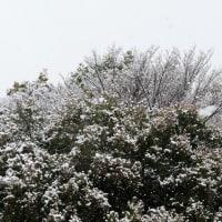 まさかの雪が降った♪