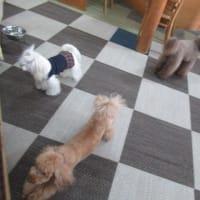20/02/20 犬の幼稚園BuddyDog