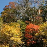秋を求めて