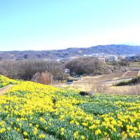 水仙の黄と青空と雪山を上田の丘に見る。