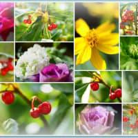●我が家の12月の花(2)ハボタン キンギョソウ ストック ビオラなど
