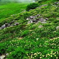 高山植物の咲く高原
