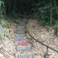 八掛山の茶農園を見に行って来ました。