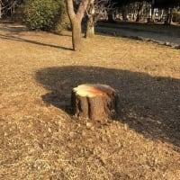 公園に新しく出来た椅子