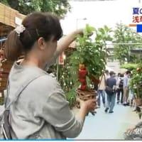 東京:浅草「ほおずき市」 2019年07月10日