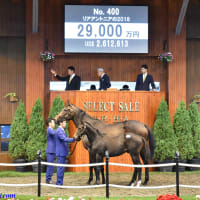【セレクトセール2019(Select Sale、1歳&当歳)】の「上場馬名簿」が発行!