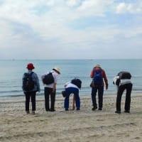 コスモスと稲毛海浜公園