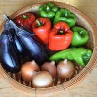 山楽の 山の野菜セット ~9月〔1〕回目・〔2〕回目