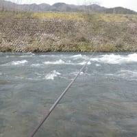 4月03日 長良川・亀尾島川・那比川でアマゴ釣り!
