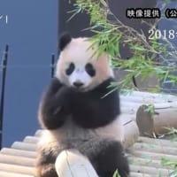『シャンシャン』順調に成長・上野動物園 2018年02月16日