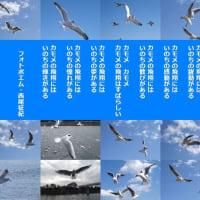 カモメの飛翔