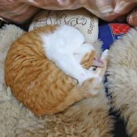 5月29日(金) ~猫の麦とごまの日常日記~