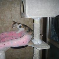 子猫たちの混合ワクチン